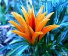 Exotické oranžová květina