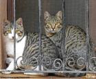 Dvě kočky v okně