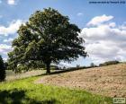 Strom v zorané