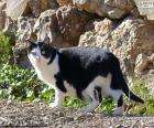 Černá a bílá kočka