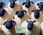 Ovce hejna Shaun