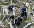 Černé olivy větev