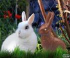 Bílý králík a ostatní čokoláda