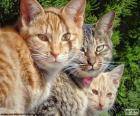 Tři kočky zírat