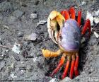 Krab barvy