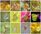 Krásné koláže s dvanácti motýly, jeden z nejkrásnějších a atraktivní hmyzu