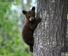 Brown bear cub vyšplhá na strom