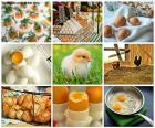 Koláž z slepičí vejce
