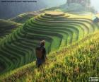 Rýžové terasy, Thajsko