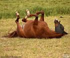 Převalování kůň
