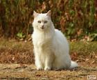 Bílá kočka sedící