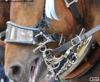 Uzdu koně
