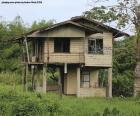 Starý dům v lese