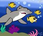 Žralok kladivoun, Julieta Vitalij