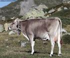 Kráva ve vysokých horách
