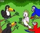 Pět ptáků Julieta Vitalij
