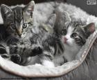 Dva roztomilý koťátka