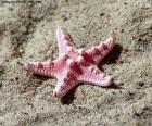 Krásné hvězdice
