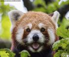 Tvář Panda červená