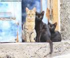Kočky u dveří