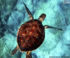 Nebeská vodní želva