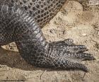 Krokodýlí noha