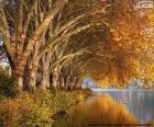 Stromy u jezera na podzim