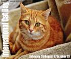 Mezinárodní den koček