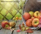 Jablka na podzim