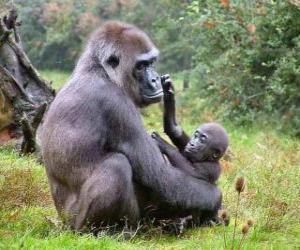 Puzle Rodina goril