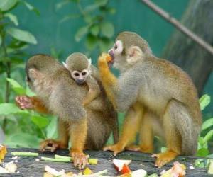 Puzle Rodina veverka opic