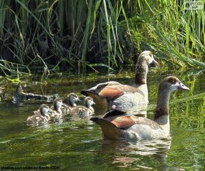 Puzle Rodina z husice nilská