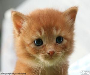 Puzle Roztomilá kočička
