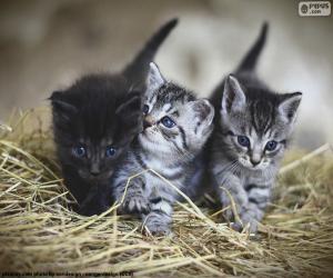 Puzle Roztomilá koťátka