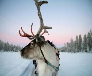 Puzle Santa Claus se soby tahání saní