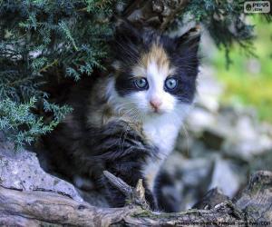 Puzle Schované kotě