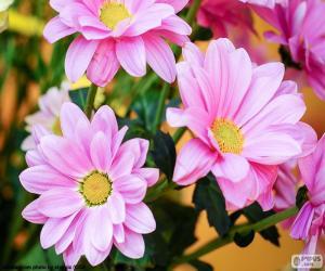 Puzle Sedmikrásky růžová