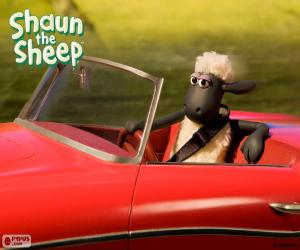 Puzle Shaun, řídit auto