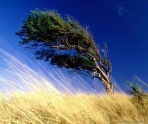 Puzle Silný vítr hits strom