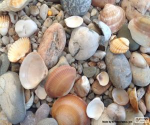 Puzle Skořápky a kameny moře