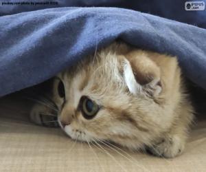 Puzle Skrytá kočka