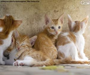 Puzle Skupina koťat