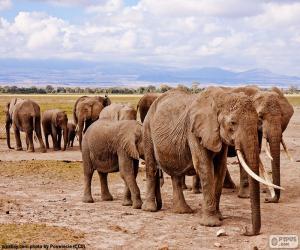 Puzle Skupina slonů