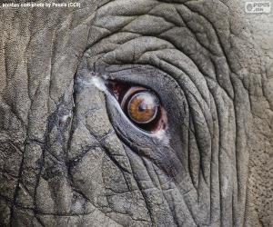 Puzle Sloní oko