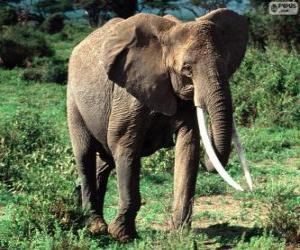 Puzle Slon s kly
