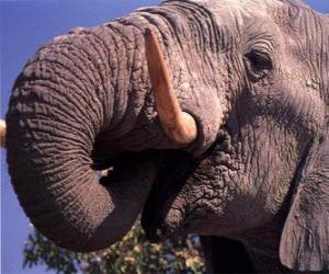 Puzle Slon stravování