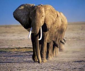 Puzle Sloni v řádku