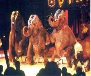 Puzle Sloni vyškoleni