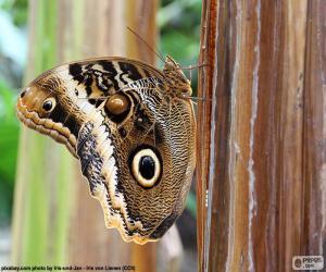 Puzle Sova motýl