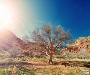 Puzle Strom bez listí